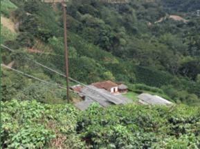 Medellin Secret - Secret - 20 Vegetatie